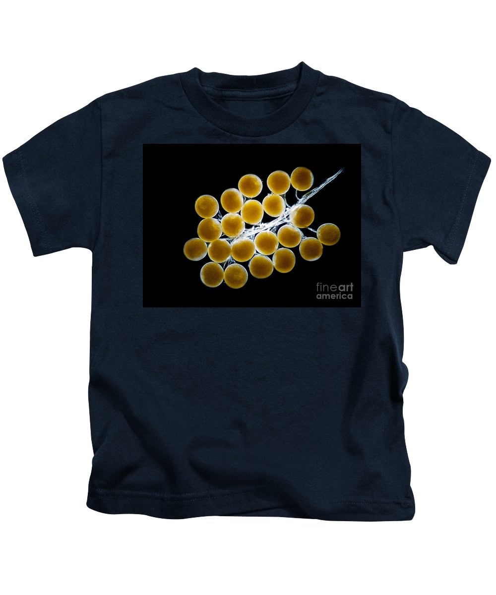Science Kids T-Shirt featuring the photograph Velvet Crab Egg Cluster, Lm by Rub�n Duro/BioMEDIA ASSOCIATES LLC