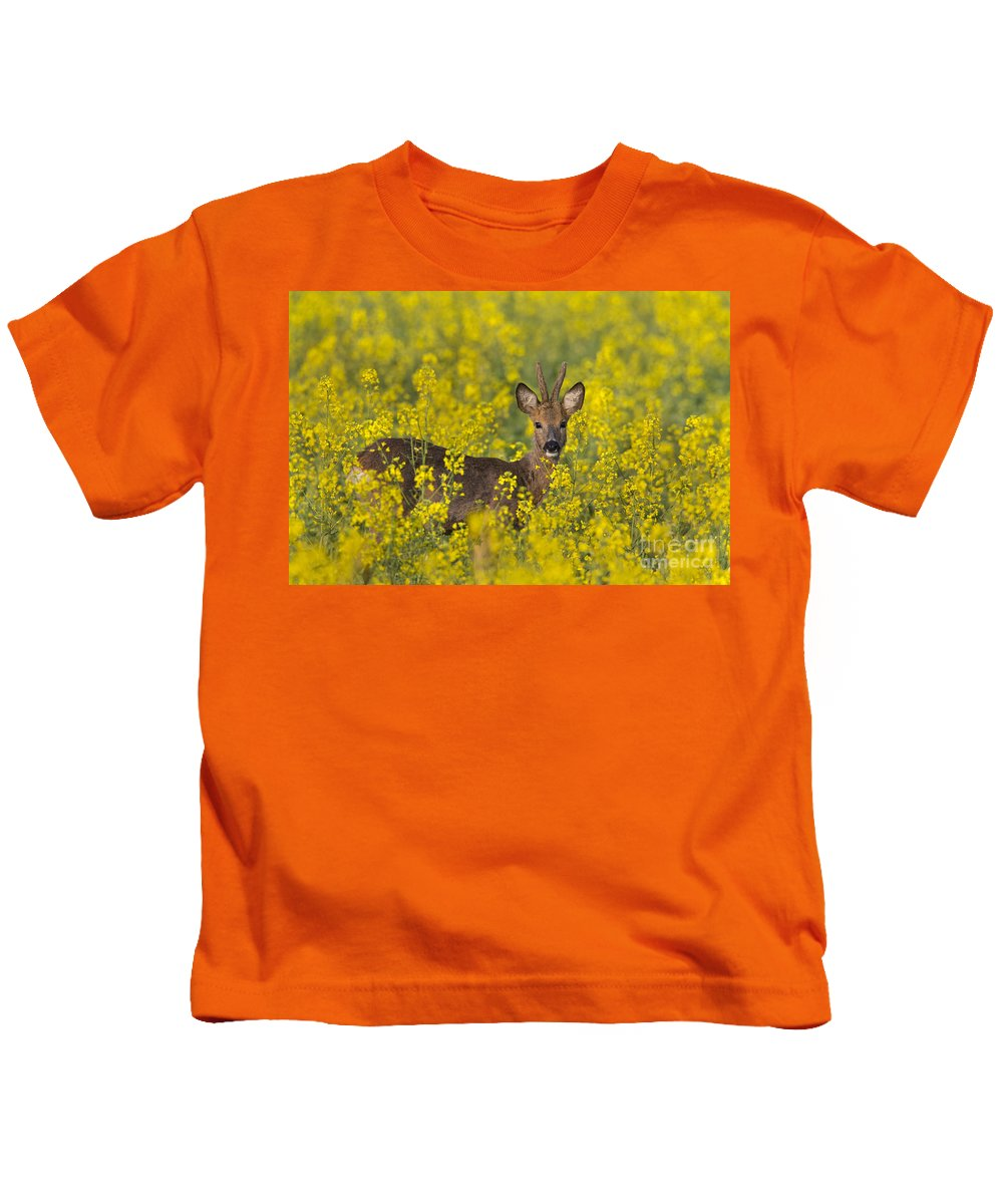 Roe Deer Kids T-Shirt featuring the photograph 110714p138 by Arterra Picture Library