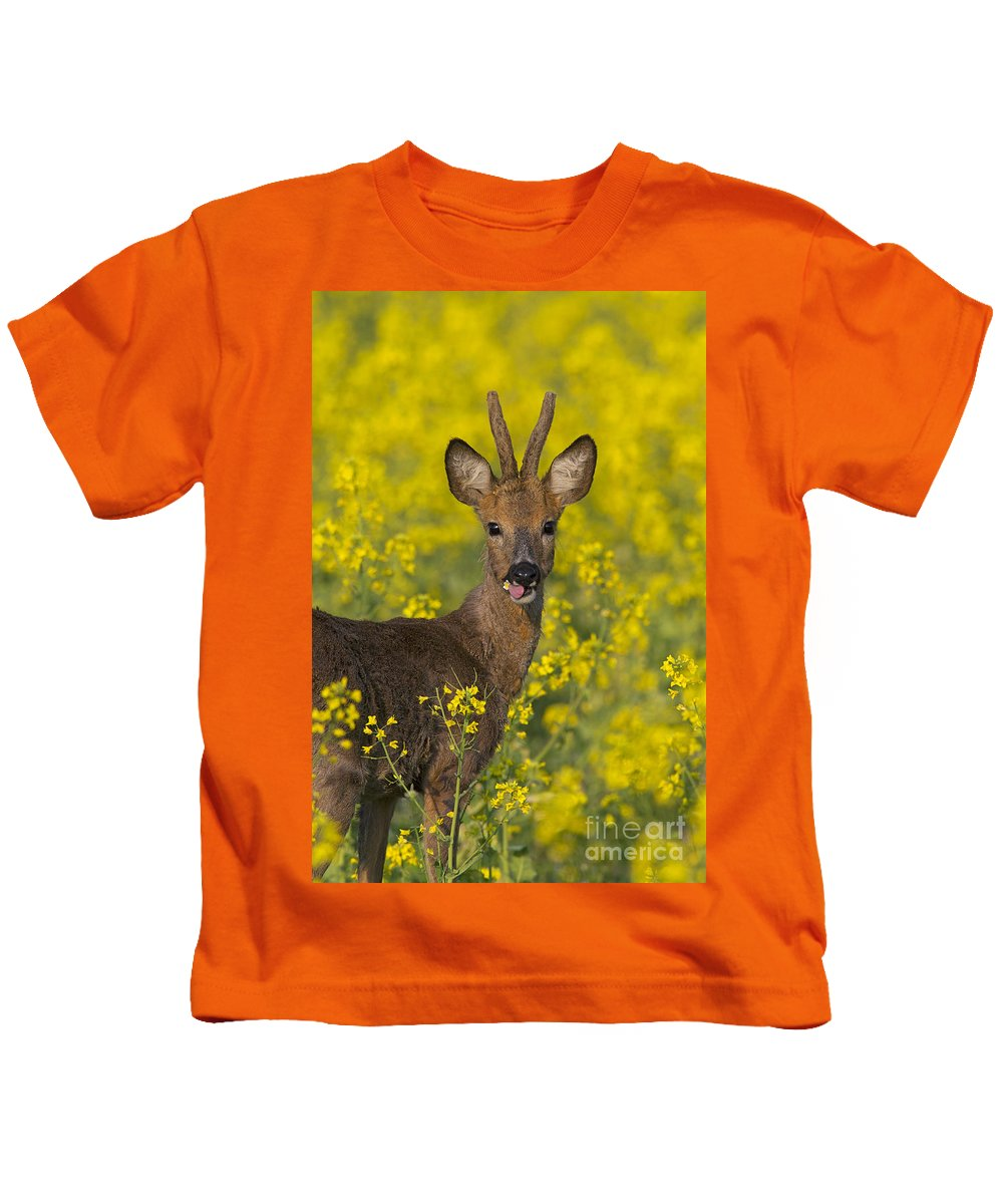 Roe Deer Kids T-Shirt featuring the photograph 110714p140 by Arterra Picture Library