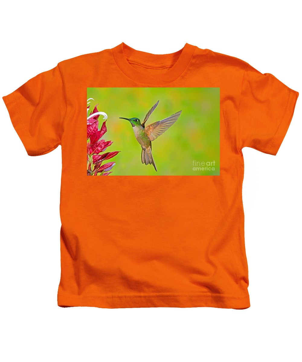 Fauna Kids T-Shirt featuring the photograph Fawn-breasted Brilliant Hummingbird by Anthony Mercieca