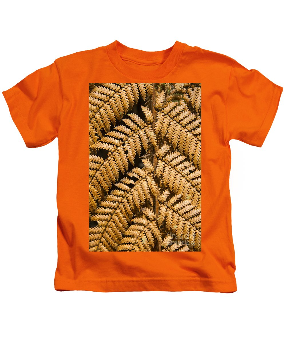 Lake Te Anau New Zealand Fern Ferns Plant Plants Rainforests Gold Leaf Leaves Branch Branches Rainforest Kids T-Shirt featuring the photograph Gold Leaf Fern by Bob Phillips