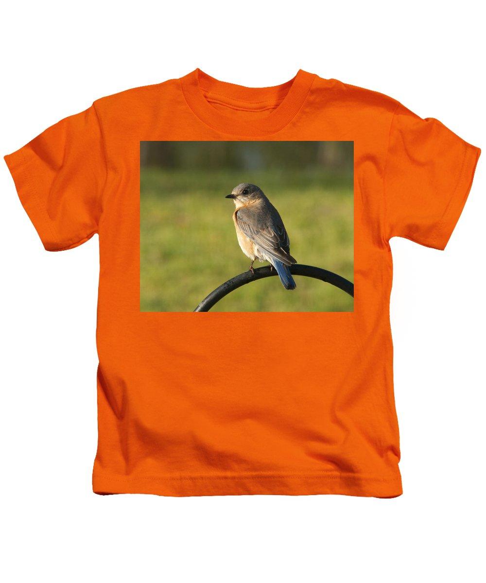 Sialia Sialis Kids T-Shirt featuring the photograph Pretty Eastern Bluebird - Sialia Sialis by Kathy Clark