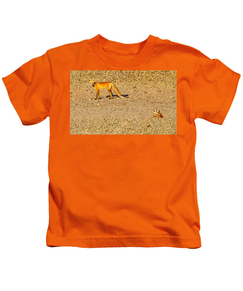 Red Foxes Nature Outdoors Wildlife All Prints Are Available In Prints Kids T-Shirt featuring the photograph Red Foxes by Brian Williamson
