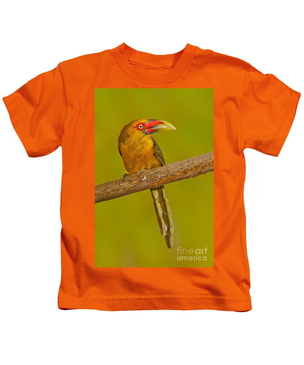 Animal Kids T-Shirt featuring the photograph Saffron Toucanet by Anthony Mercieca