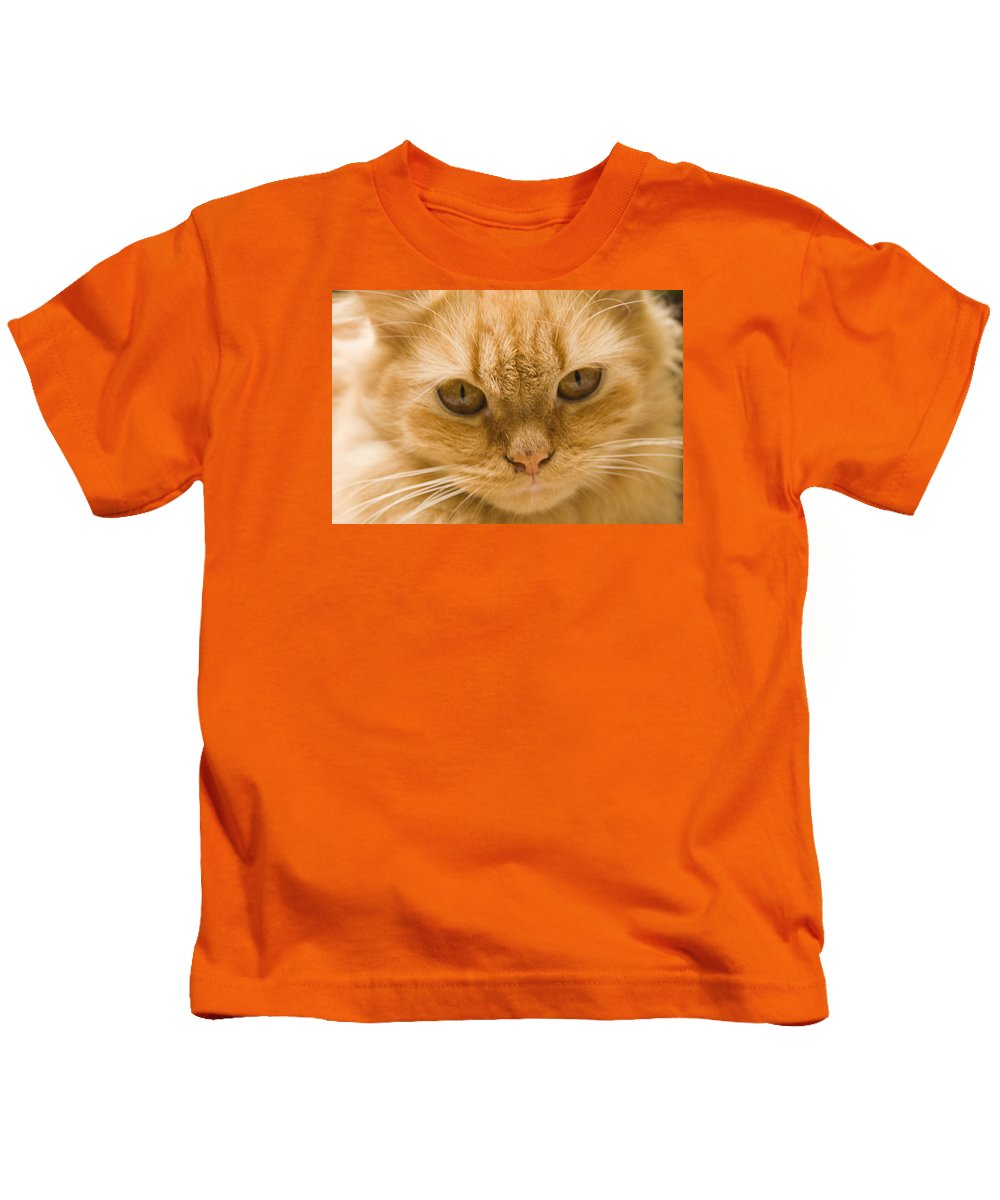 Domesticate Kids T-Shirt featuring the photograph Skc 1483 Unconcerned Stare by Sunil Kapadia