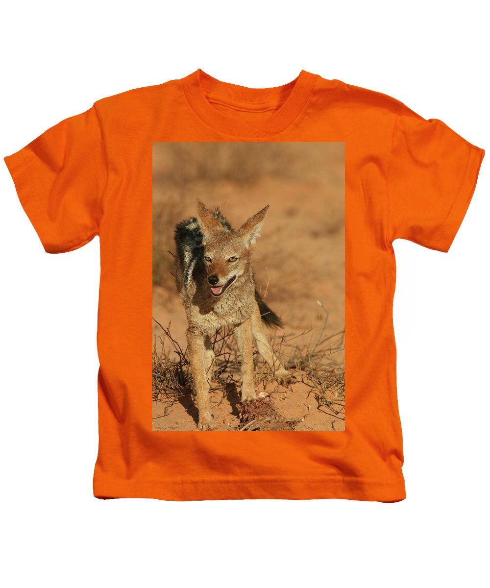 Africa Kids T-Shirt featuring the photograph Black-backed Jackal by Bruce J Robinson