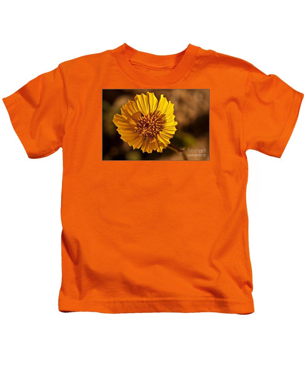 Arizona Kids T-Shirt featuring the photograph Desert Dandelion by Robert Bales