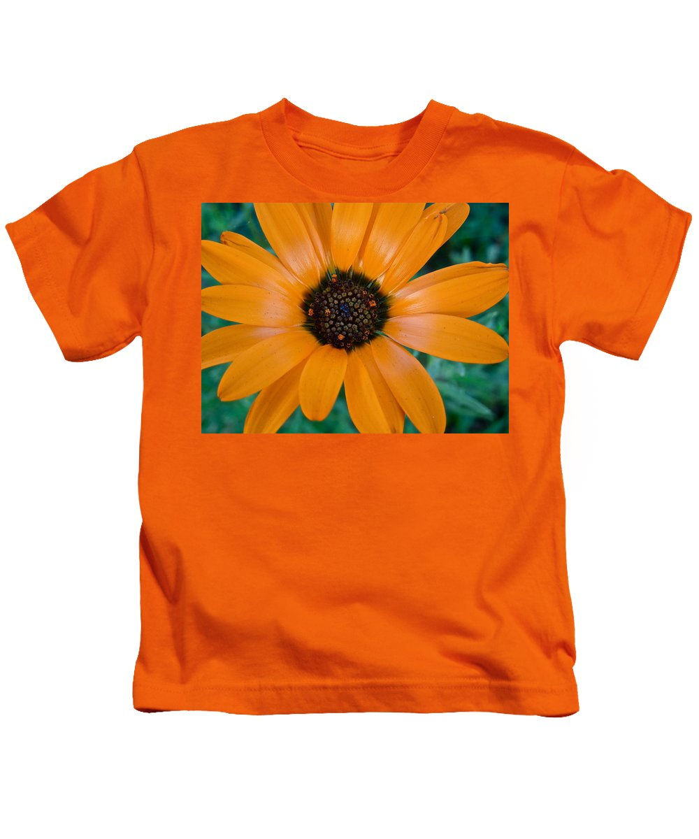 Flowers Kids T-Shirt featuring the photograph Orange Daisy by Diana Hatcher