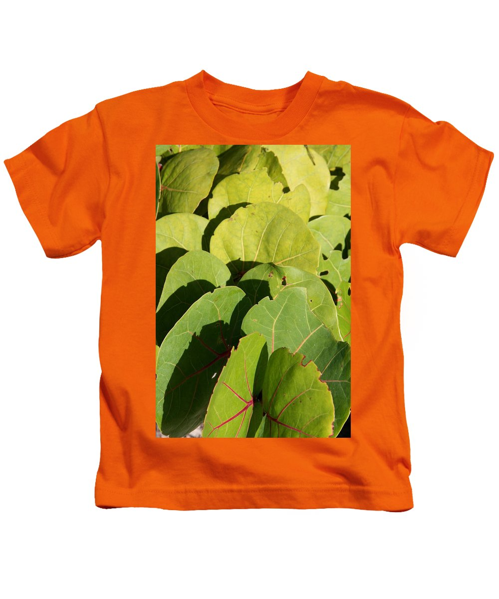 Seagrape Kids T-Shirt featuring the photograph Seagrape Leaf Layer by Christiane Schulze Art And Photography