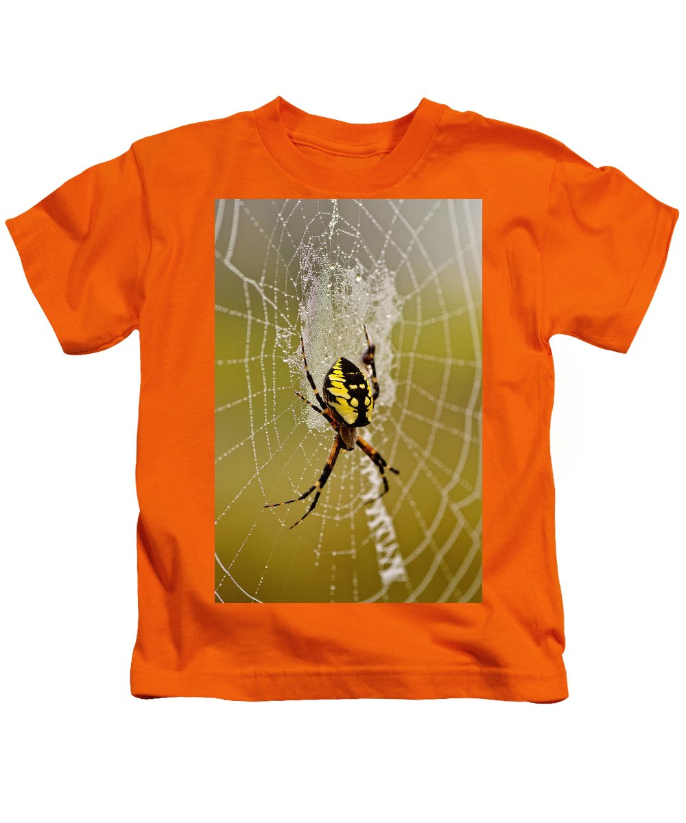 Spider Kids T-Shirt featuring the photograph Spider Power by Sue Capuano