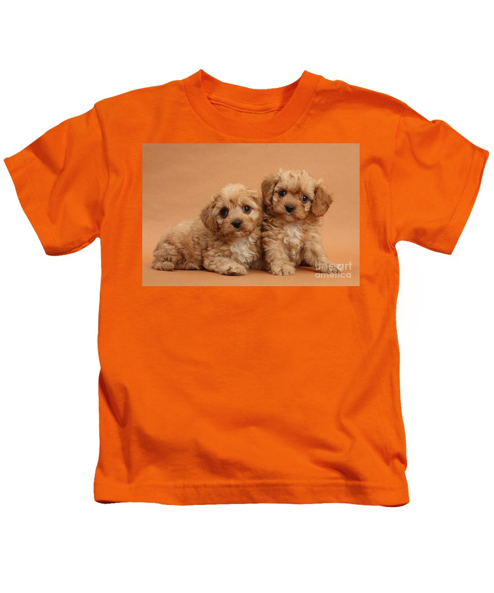 Animal Kids T-Shirt featuring the photograph Cavapoo Pups by Mark Taylor