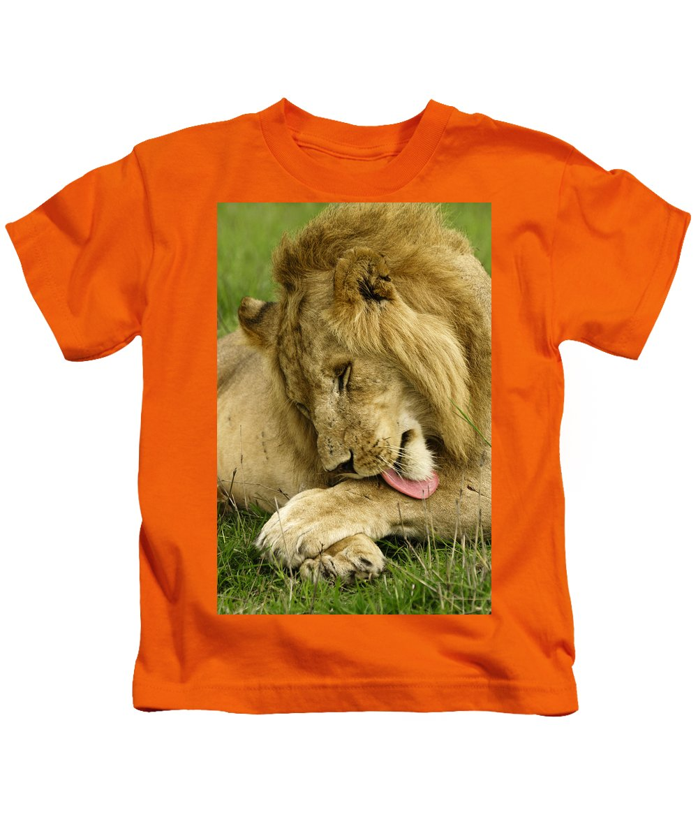 Lion Kids T-Shirt featuring the photograph Cleaning Up by Michele Burgess