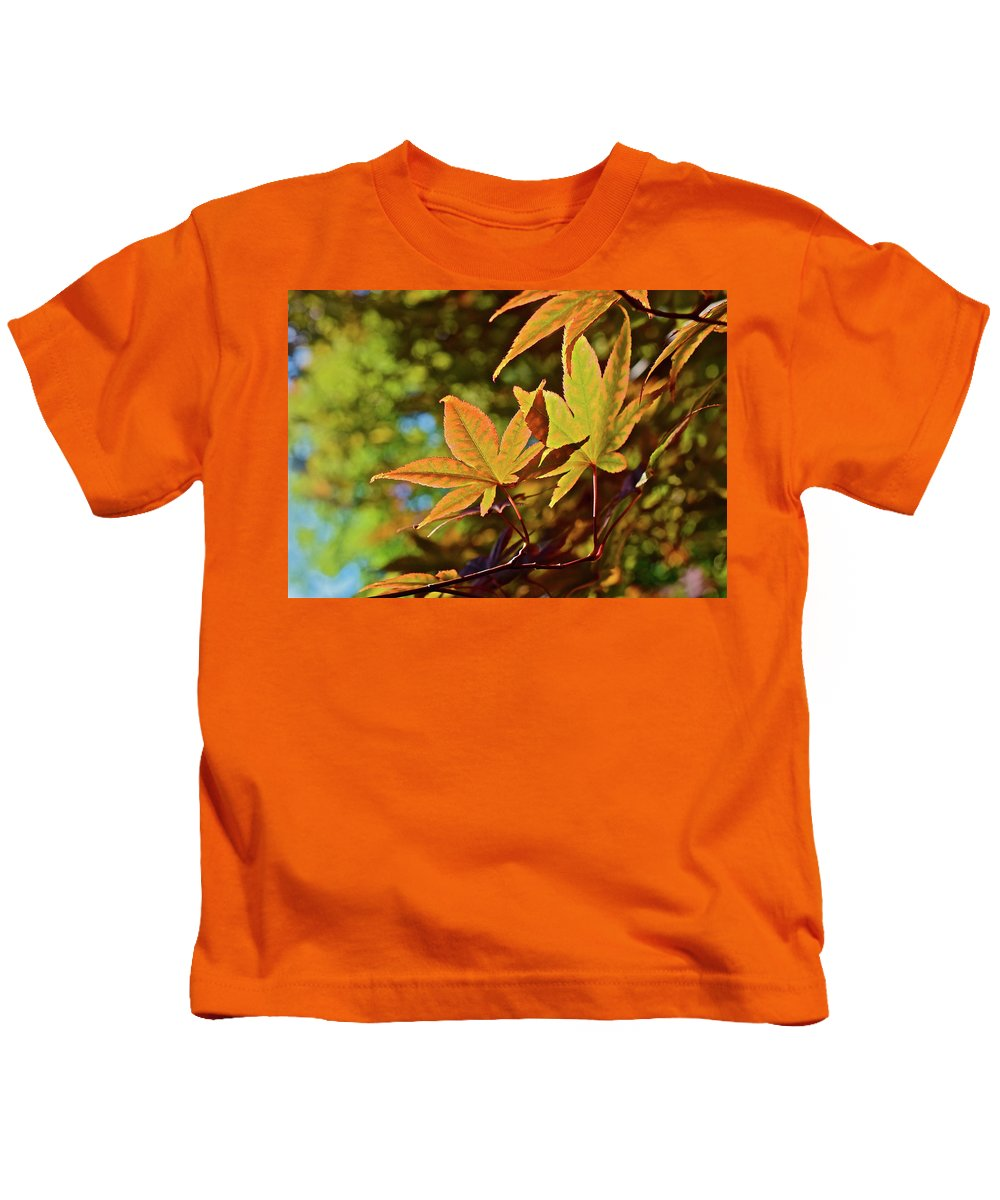 Japanese Maple Kids T-Shirt featuring the photograph 2016 Japanese Maple In The Sunlight by Janis Nussbaum Senungetuk