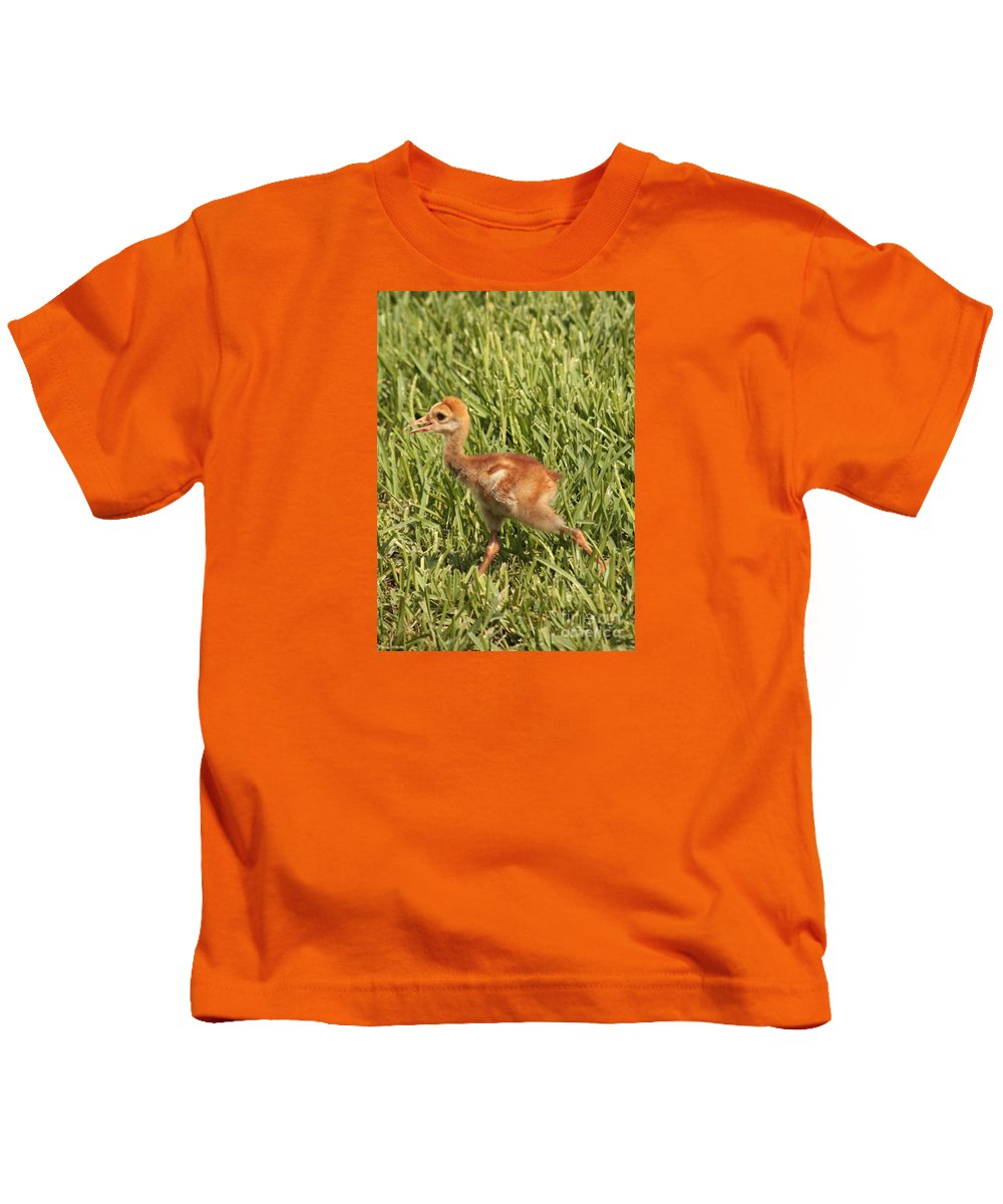 Sandhill Crane Kids T-Shirt featuring the photograph Baby Sandhill Crane by Carol Groenen