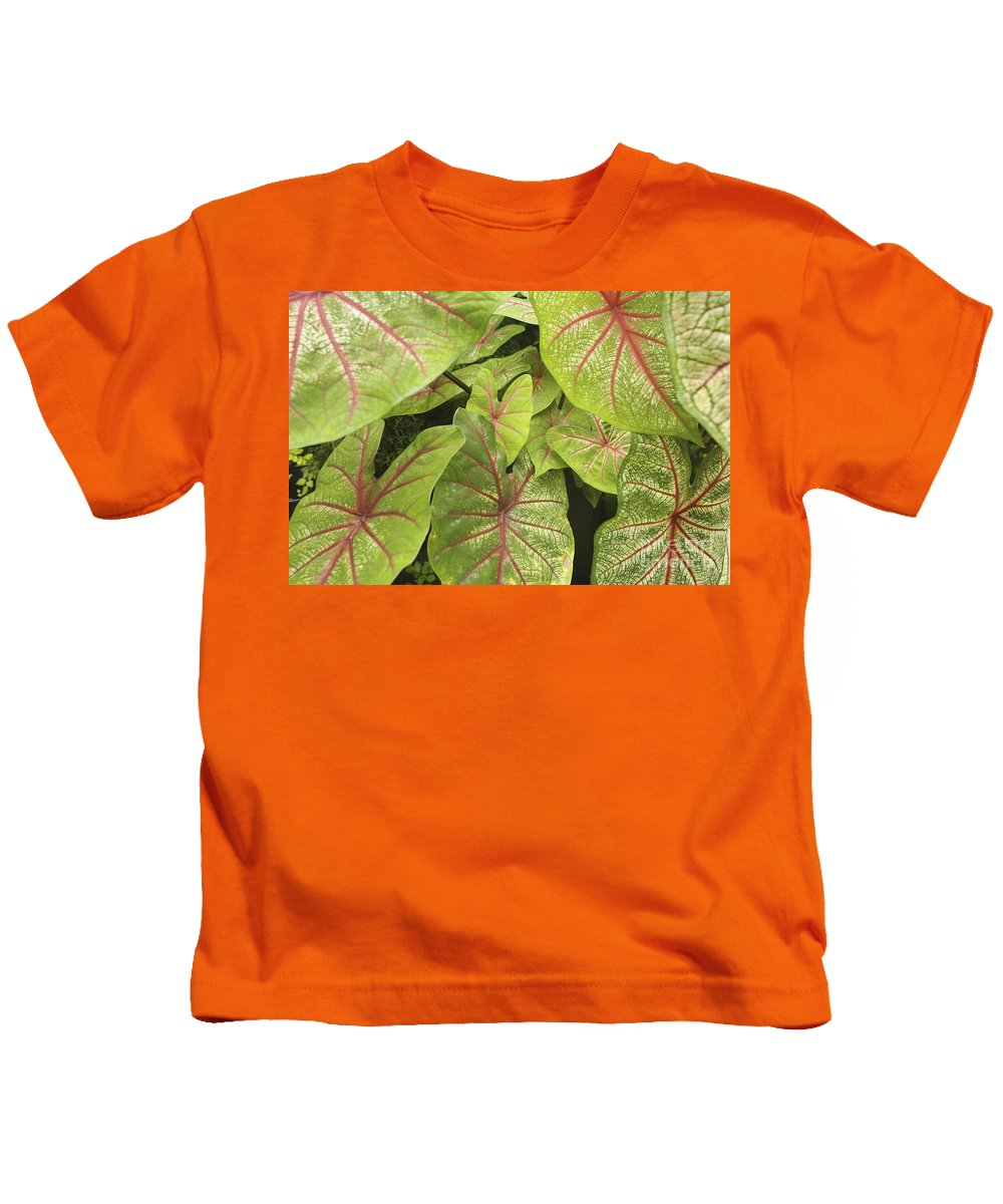 66-csm0195 Kids T-Shirt featuring the photograph Caladium Leaves by Ron Dahlquist - Printscapes