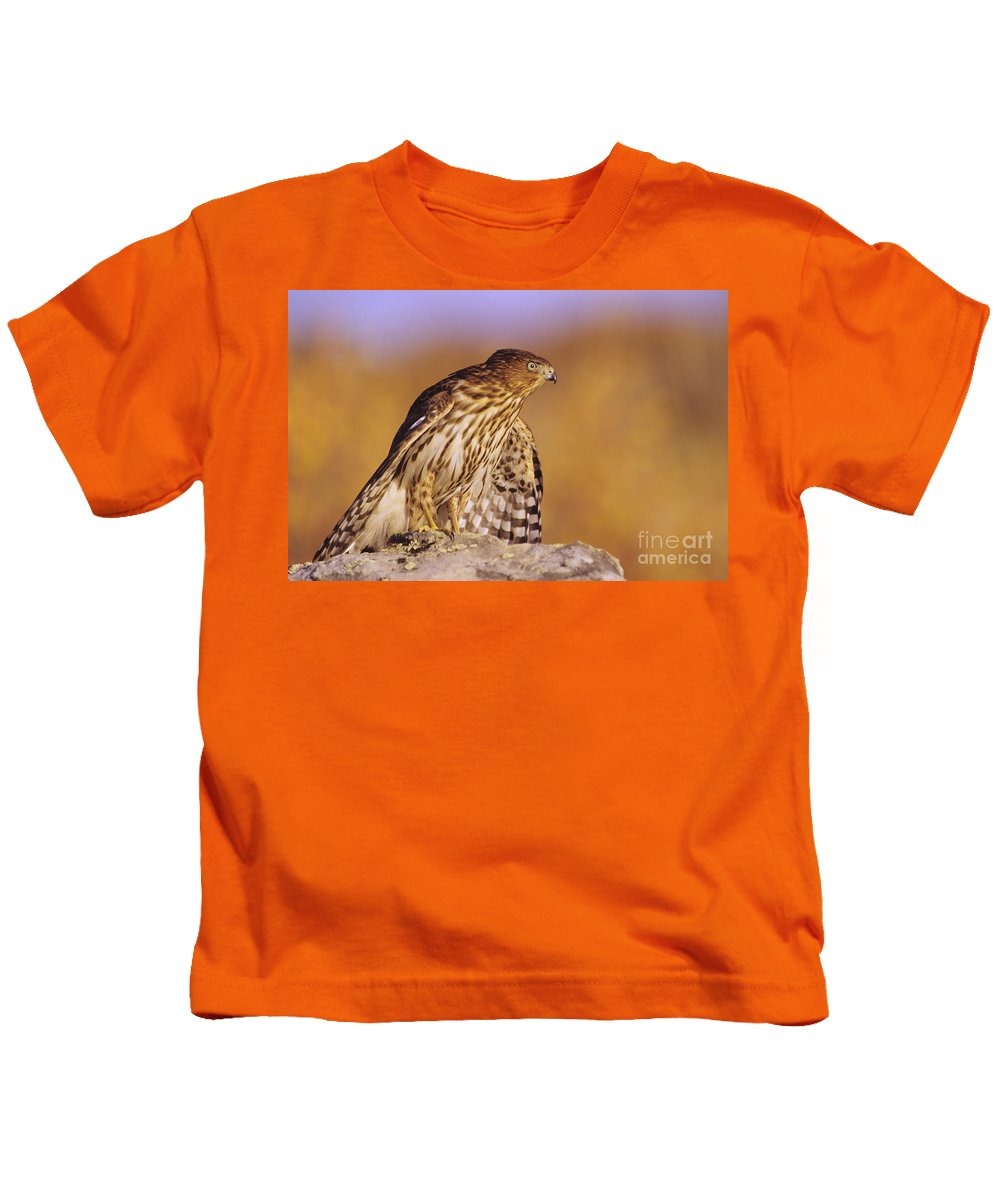 Accipiter Kids T-Shirt featuring the photograph Coopers Hawk by John Hyde - Printscapes