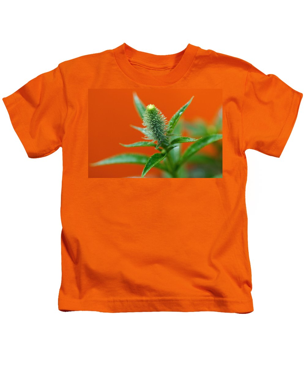 Orange Kids T-Shirt featuring the photograph Eager For Orange by Lisa Knechtel