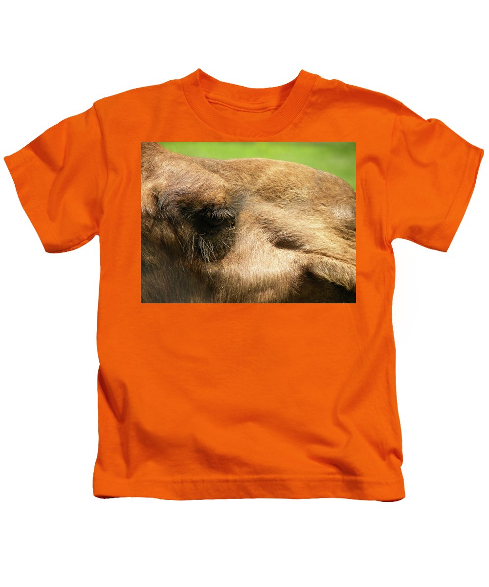 Camel Kids T-Shirt featuring the photograph I've Got My Eye On You by Trish Tritz