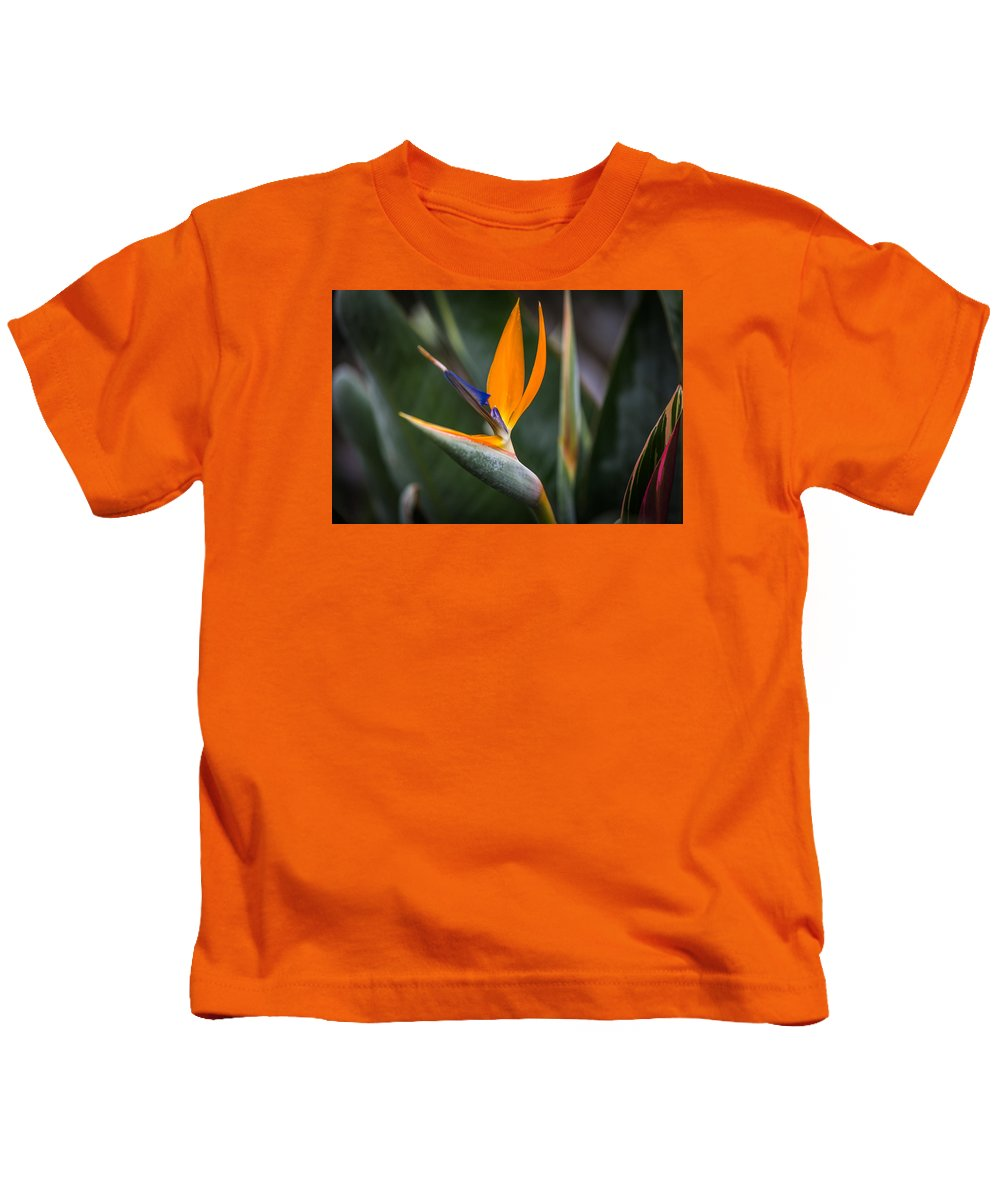 Strelitzia Flower Kids T-Shirt featuring the photograph Paradise Song by Calazone's Flics