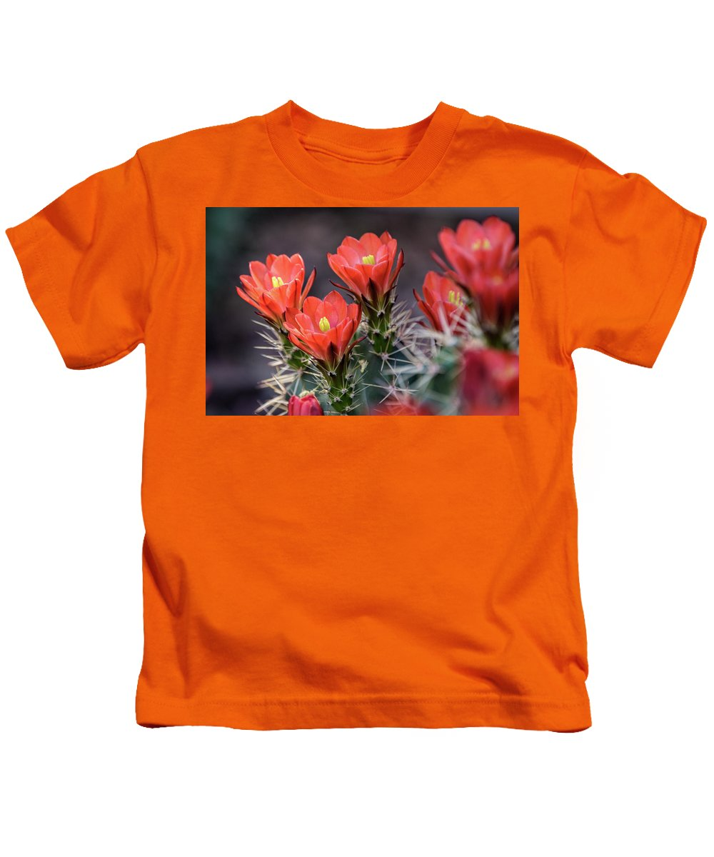 Scarlet Hedgehog Cactus Kids T-Shirt featuring the photograph Scarlet by Saija Lehtonen