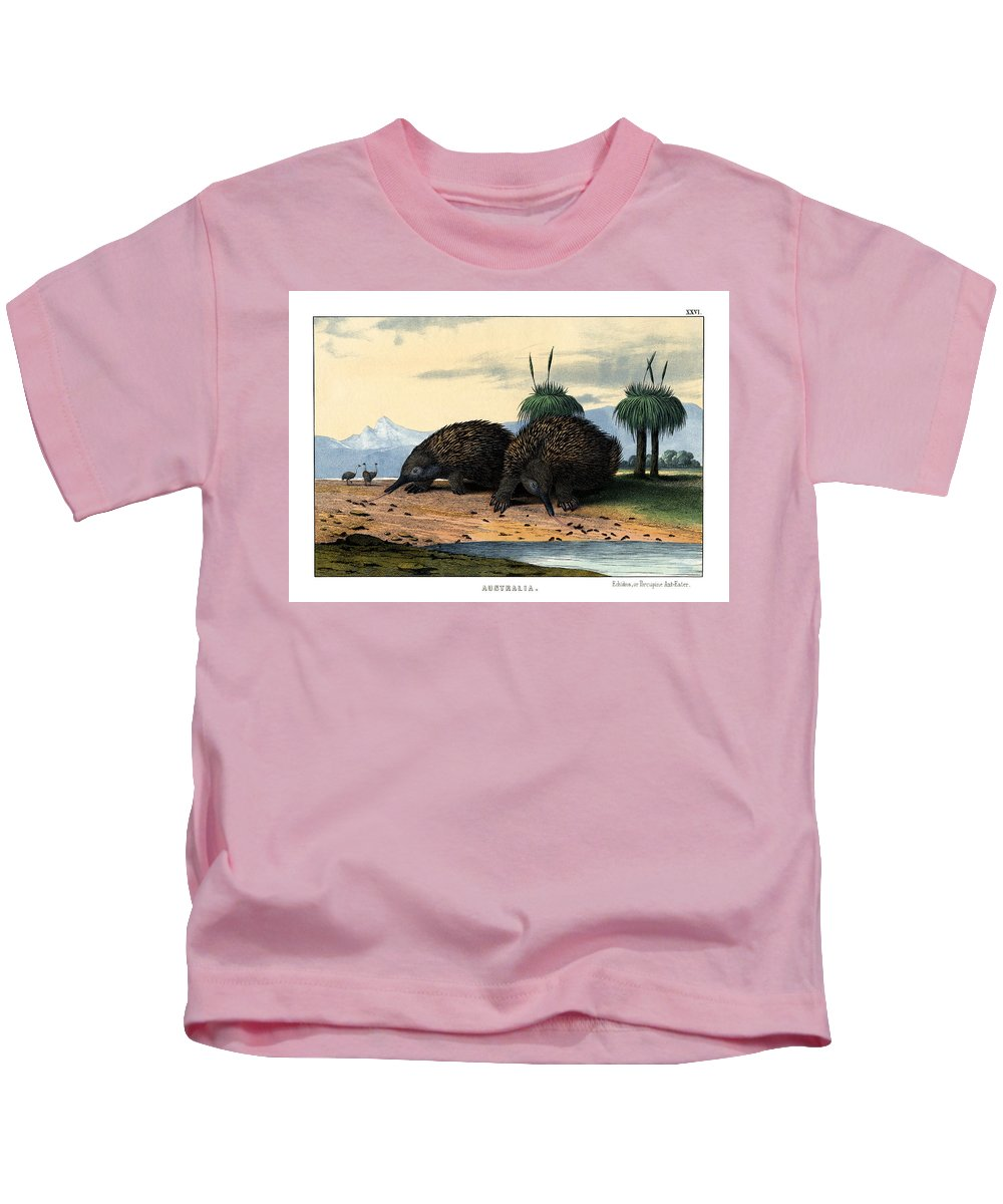 Wild Animals Kids T-Shirt featuring the drawing Echidna Or Porcupine Anteater by Splendid Art Prints