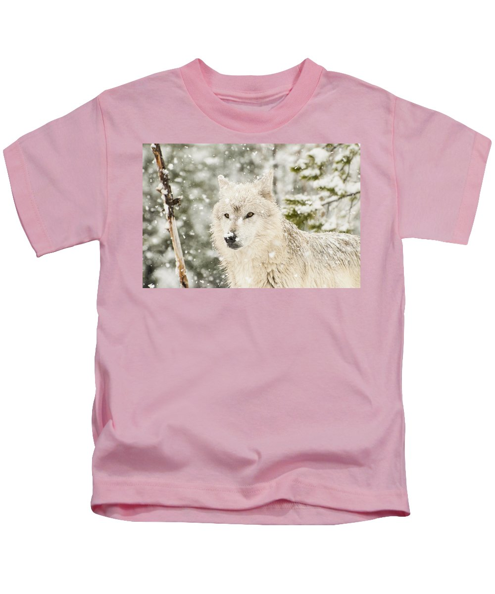 Wolf Kids T-Shirt featuring the photograph Wolf In Snow by Donna Doherty