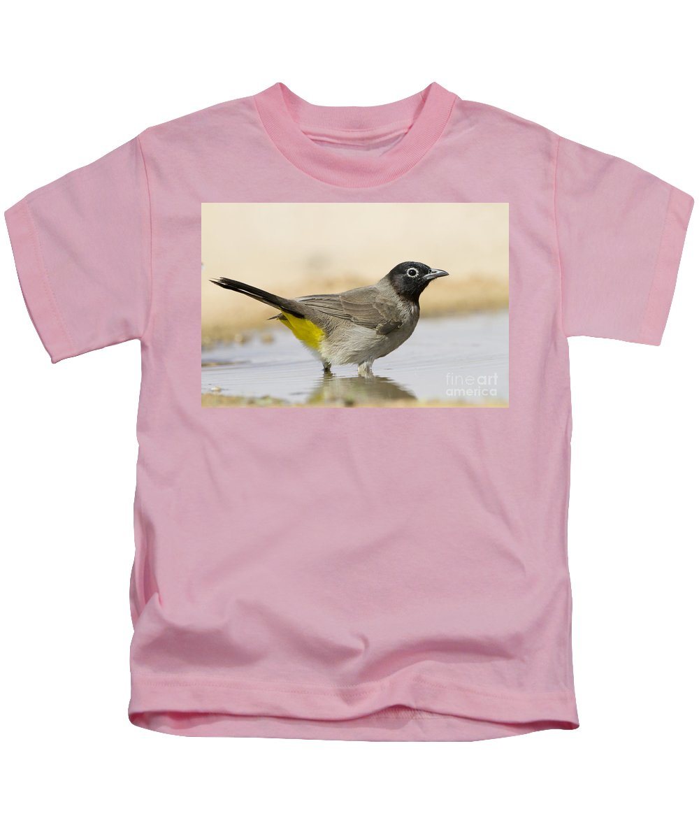 Ornithology Kids T-Shirt featuring the photograph Yellow-vented Bulbul Pycnonotus Xanthopygos by Eyal Bartov