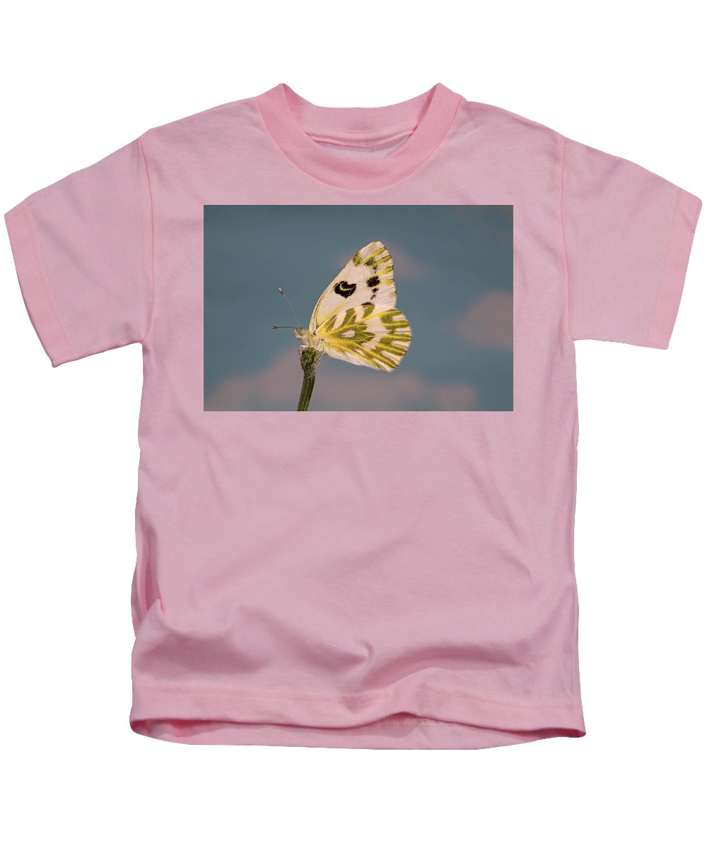 Becker's; White; Butterfly; Pontia; Beckerii; Great; Beasin; White; Sagebrush; White; Probiscis; Feeding Tube; Nectar; Pollen; Nature; Outdoors; Garden; Tranquil; Feeding; Eating Kids T-Shirt featuring the photograph Becker's White Butterfly by Buddy Mays
