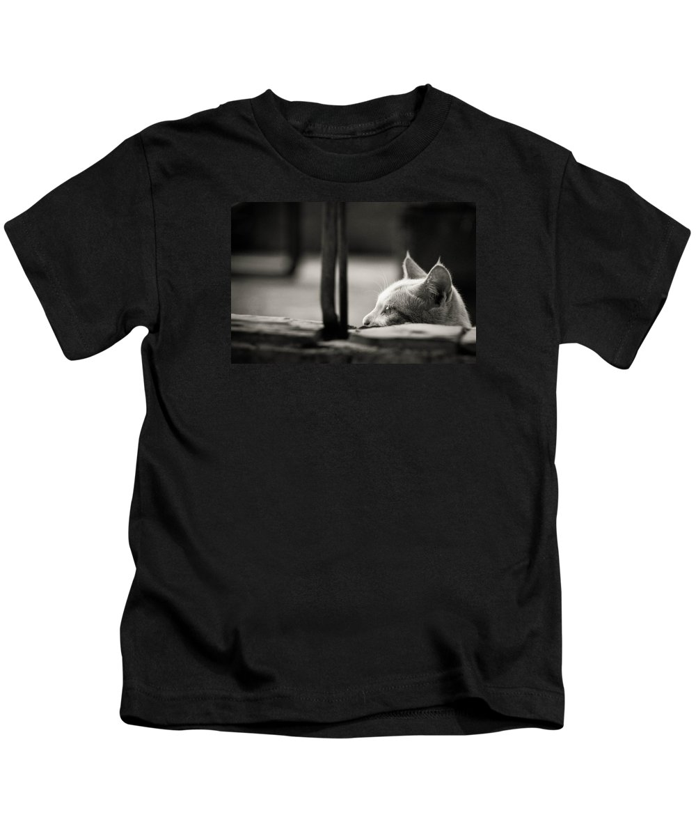 Cat Kids T-Shirt featuring the photograph Cat by FL collection