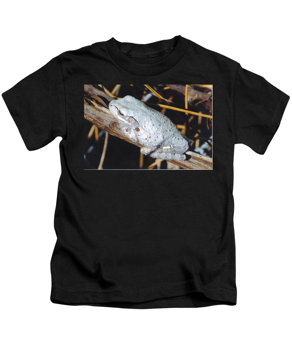 Riding A Branch Kids T-Shirt featuring the photograph Gray Treefrog by Robert Floyd