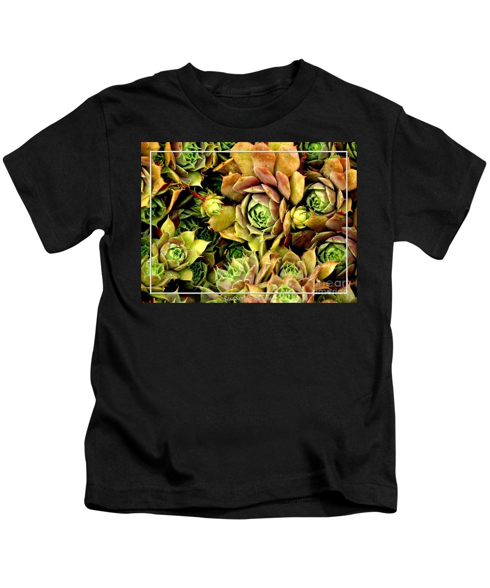 Hens And Chicks Kids T-Shirt featuring the photograph Hens And Chick Plants by Rose Santuci-Sofranko
