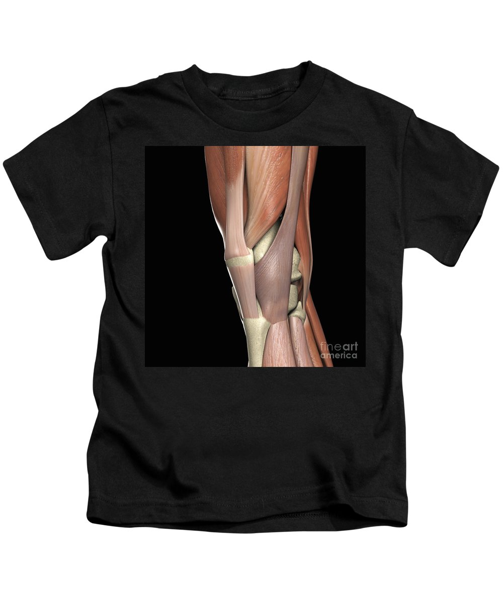 Muscular System Kids T-Shirt featuring the photograph The Muscles Of The Knee by Science Picture Co