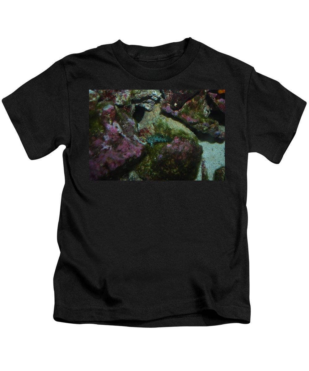 Taken Through Side Of Aquarium Kids T-Shirt featuring the photograph Tropical Fish by Robert Floyd