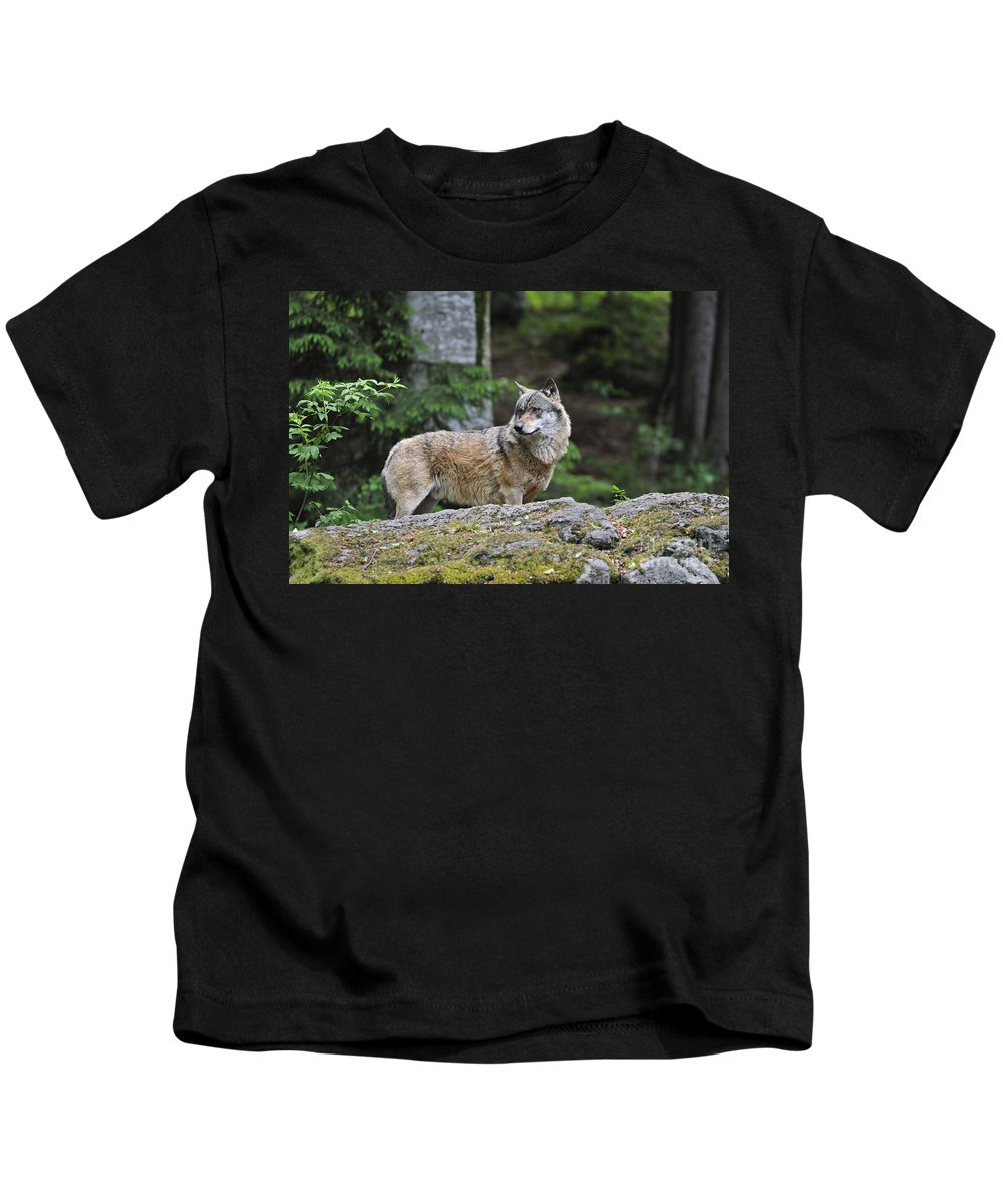 Europe Kids T-Shirt featuring the photograph 110613p022 by Arterra Picture Library