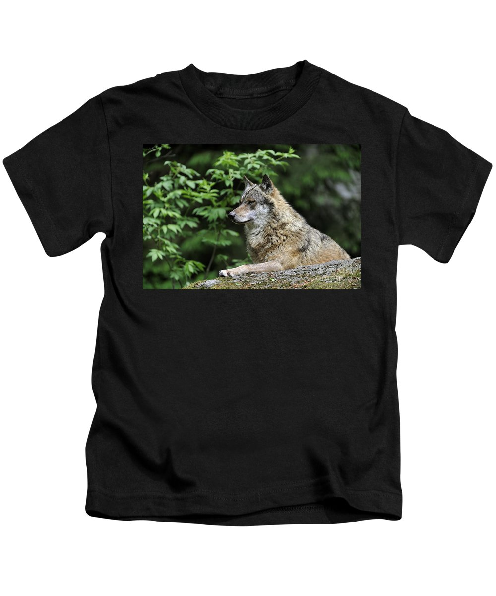 Europe Kids T-Shirt featuring the photograph 110613p024 by Arterra Picture Library