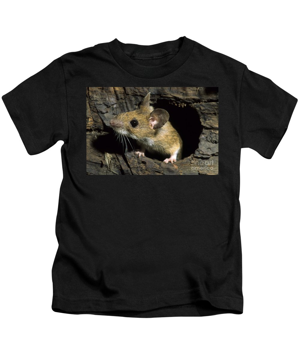 European Kids T-Shirt featuring the photograph 111216p259 by Arterra Picture Library