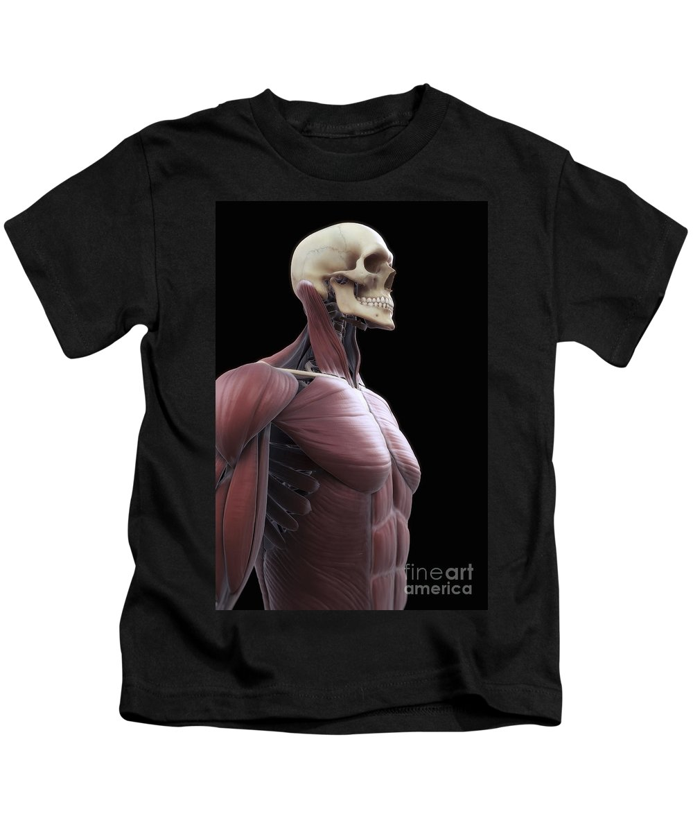 Abdominal Kids T-Shirt featuring the photograph Muscles Of The Upper Body by Science Picture Co