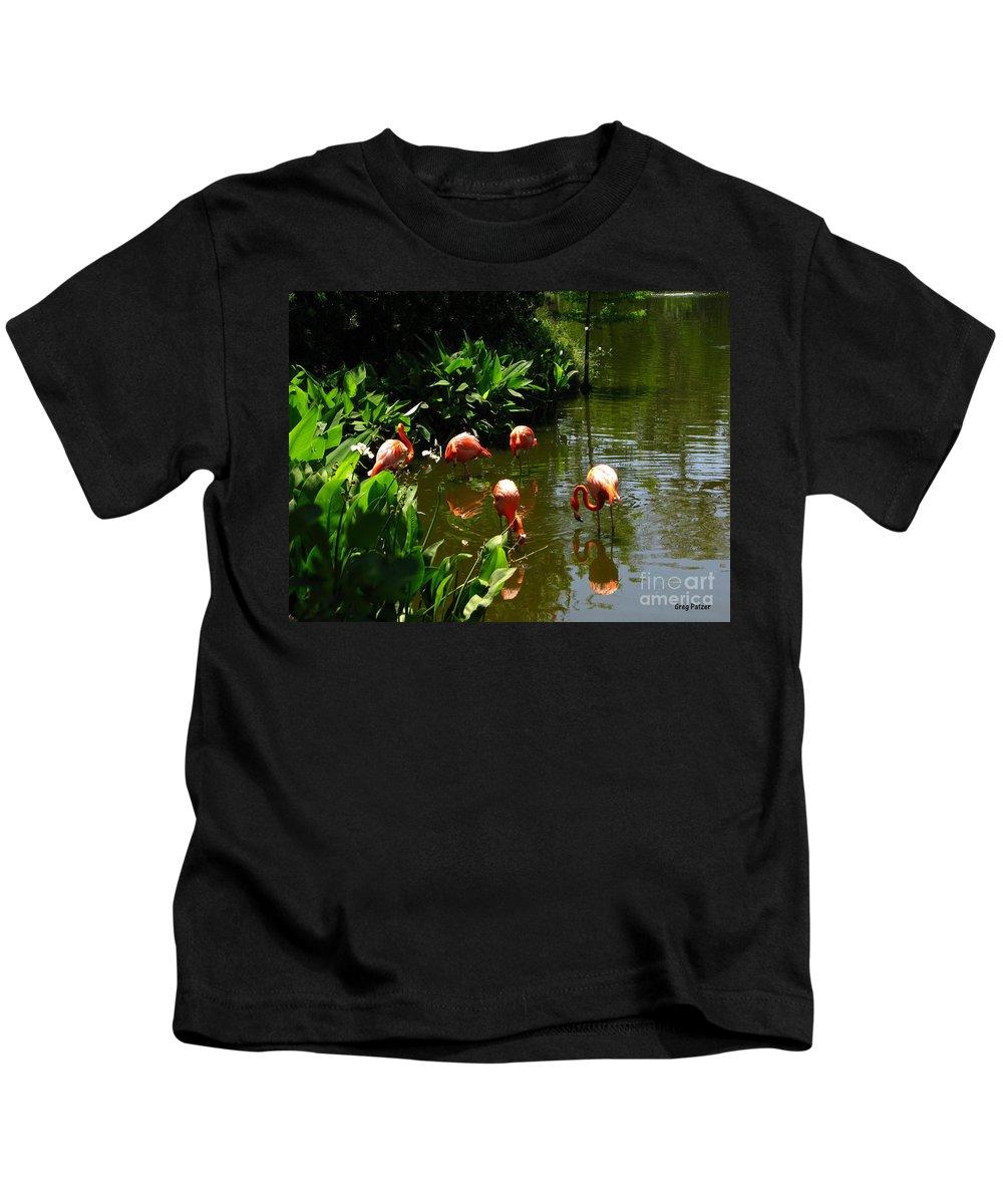 Flamingos Kids T-Shirt featuring the photograph Flamingos by Greg Patzer