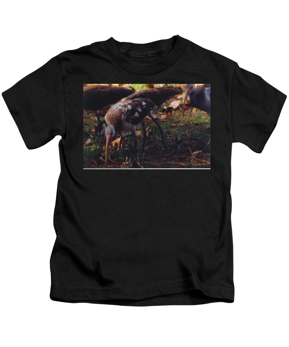 North Ft.myers Exterminators Cleaning My Yard Of Grubs. Kids T-Shirt featuring the photograph Juvenile White Ibis by Robert Floyd