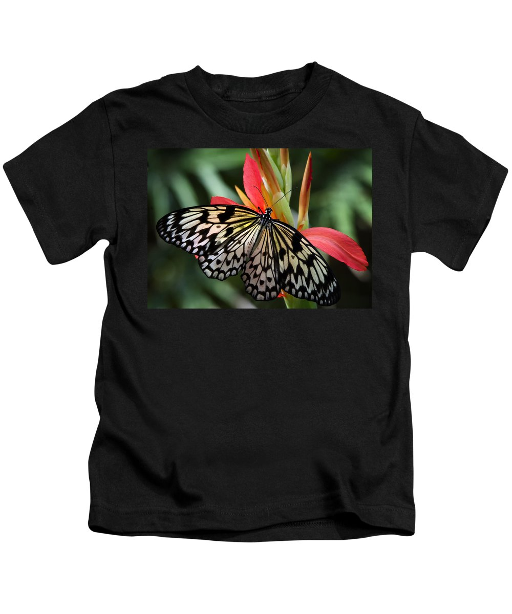 Paper Kite Butterfly Kids T-Shirt featuring the photograph Nature's Treasures by Saija Lehtonen