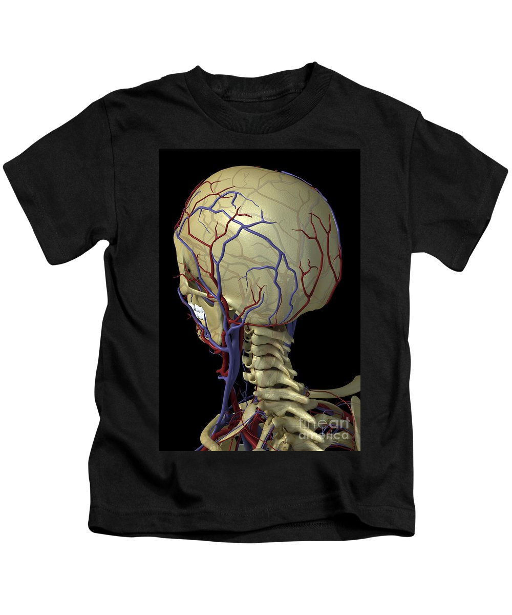 Blood Vessels Kids T-Shirt featuring the photograph The Cardiovascular System by Science Picture Co