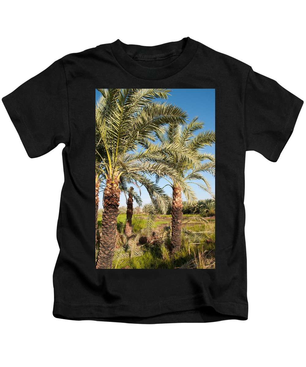Oasis Palm Trees Kids T-Shirt featuring the digital art Dakhla by Carol Ailles