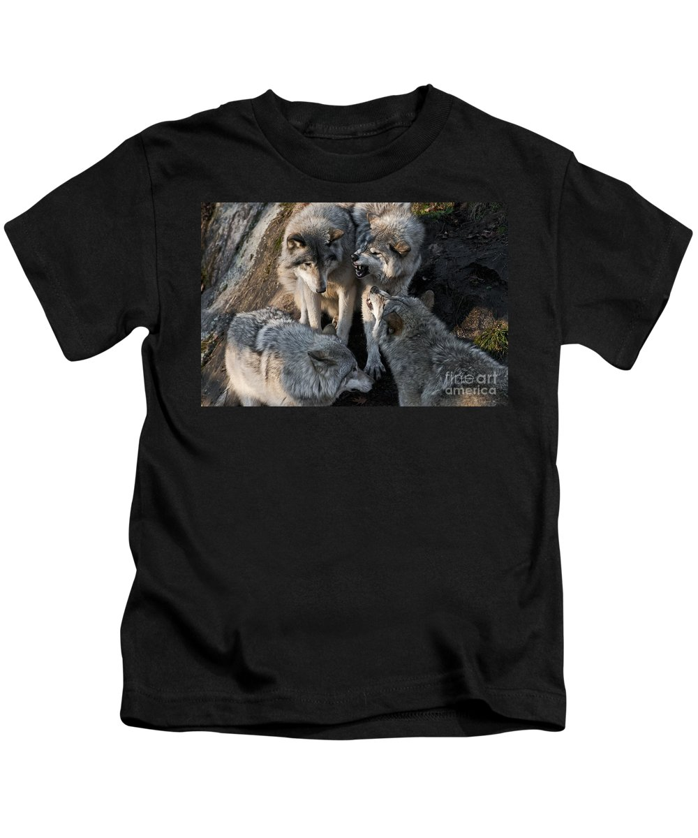 Timber Wolf Photography Kids T-Shirt featuring the photograph Timber Wolves by Wolves Only