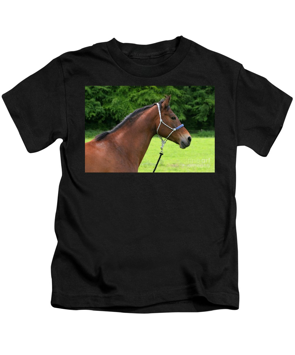 Bay Horse Kids T-Shirt featuring the photograph Horse Portrait by Angel Ciesniarska