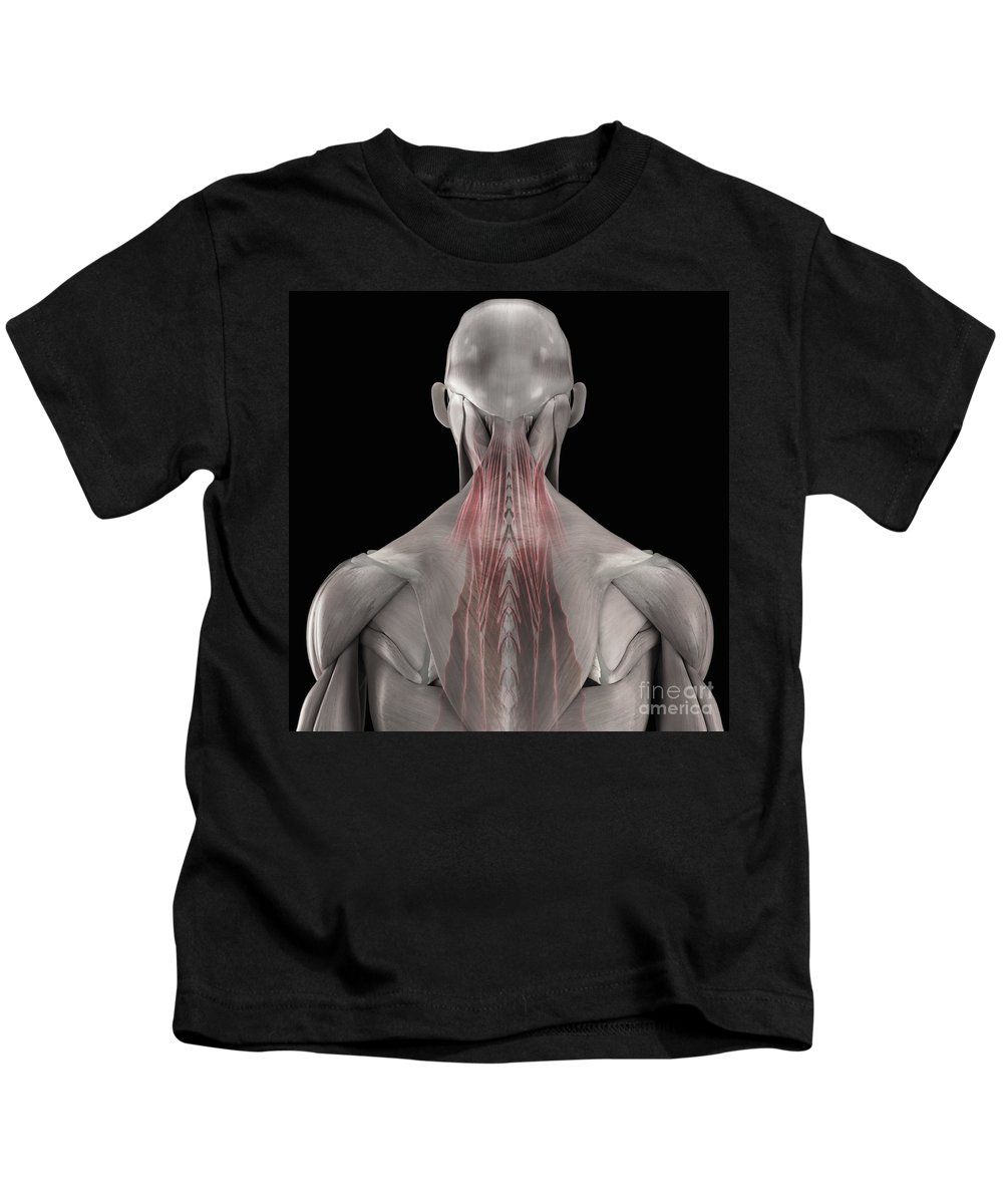 3d Visualization Kids T-Shirt featuring the photograph The Muscles Of The Back by Science Picture Co