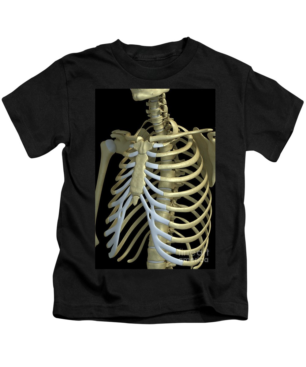 Biomedical Illustration Kids T-Shirt featuring the photograph The Rib Cage by Science Picture Co