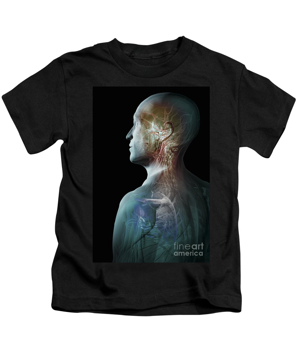 Digitally Generated Image Kids T-Shirt featuring the photograph Human Anatomy by Science Picture Co