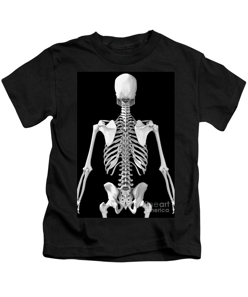Vertebrae Kids T-Shirt featuring the photograph Bones Of The Upper Body by Science Picture Co