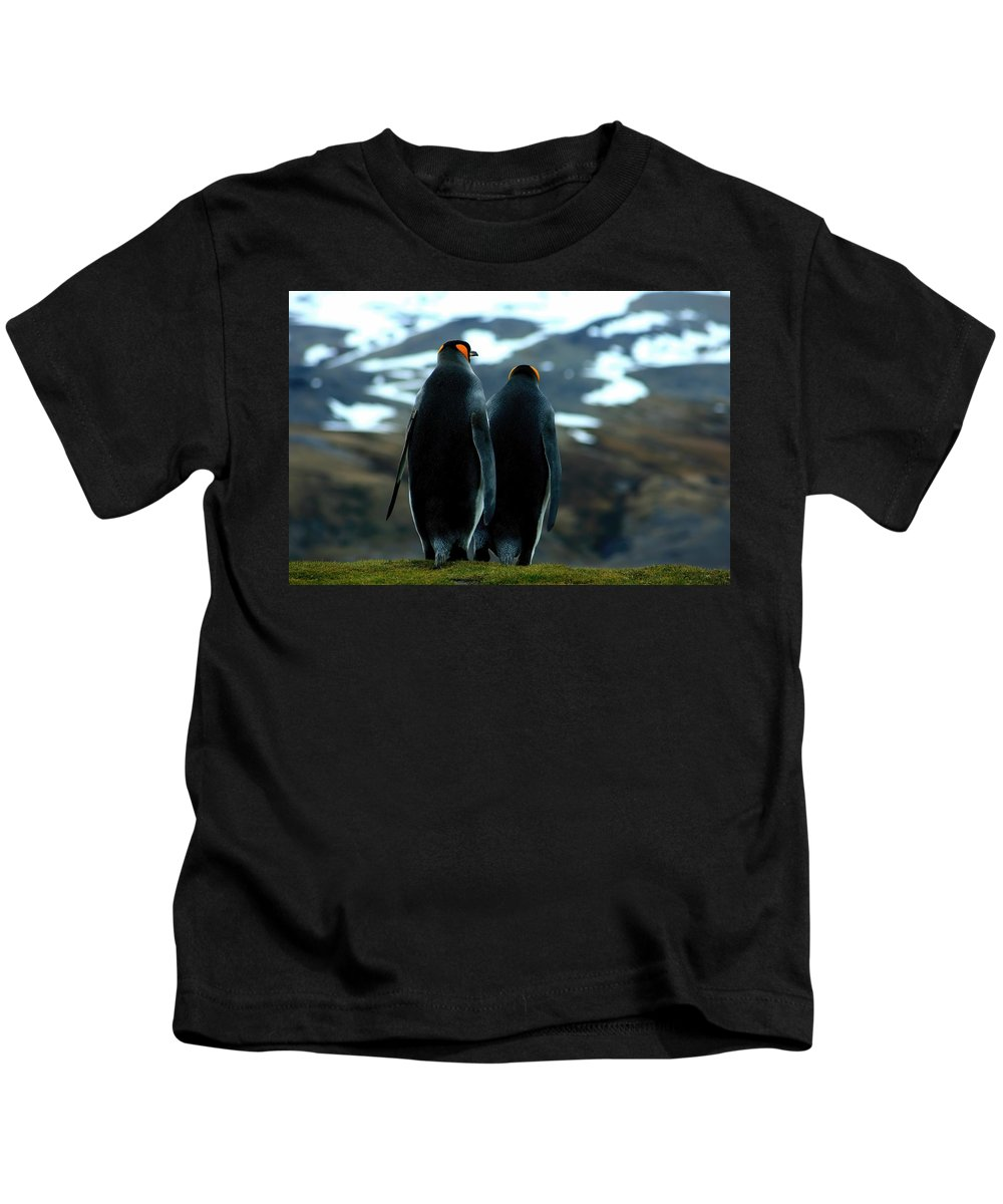 Two King Penguins Kids T-Shirt featuring the photograph King Penguins by Amanda Stadther