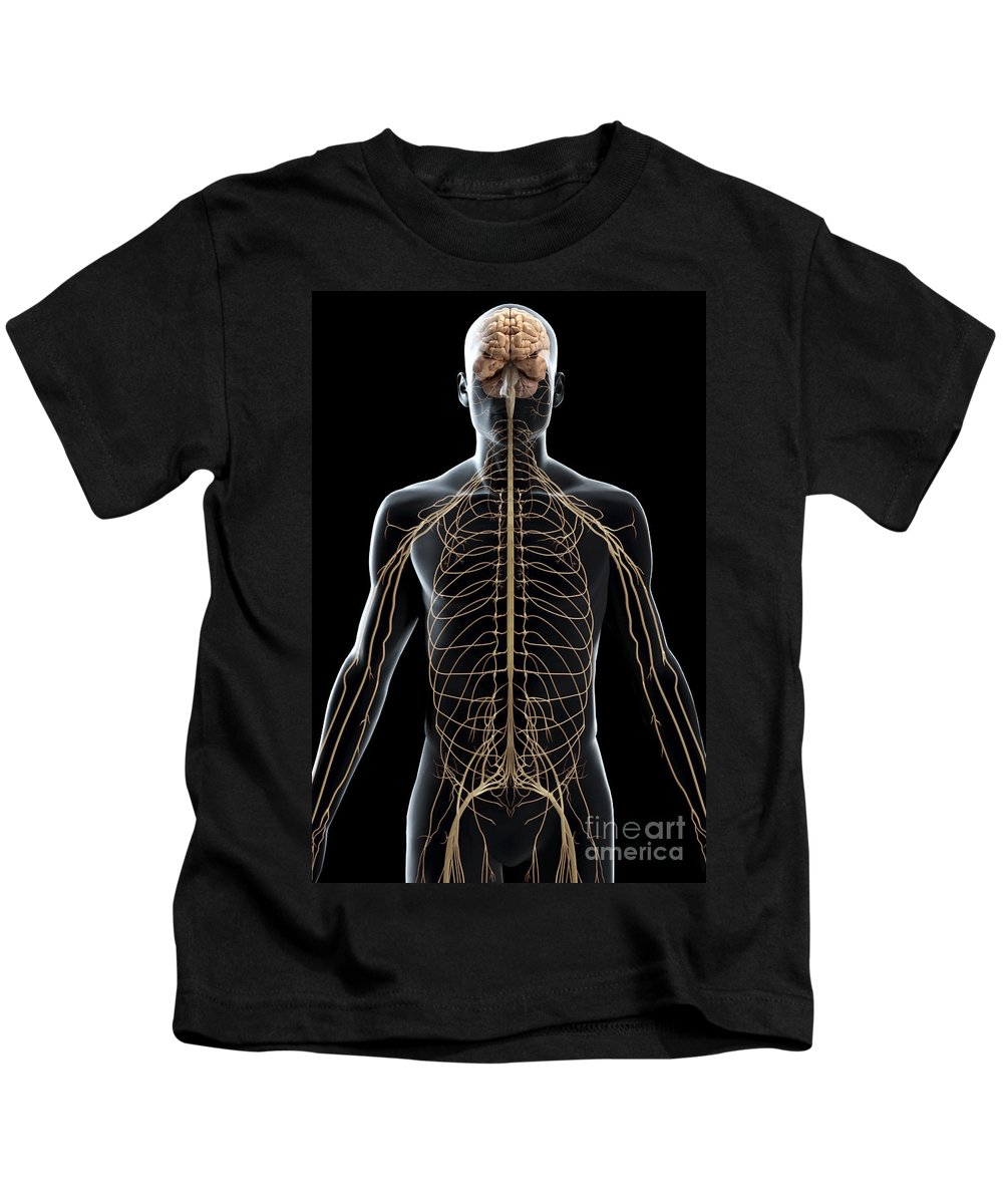 Frontal Cortex Kids T-Shirt featuring the photograph The Nerves Of The Upper Body by Science Picture Co